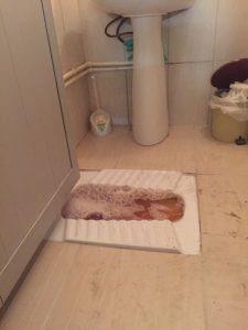 tikanmis tuvalet resimleri